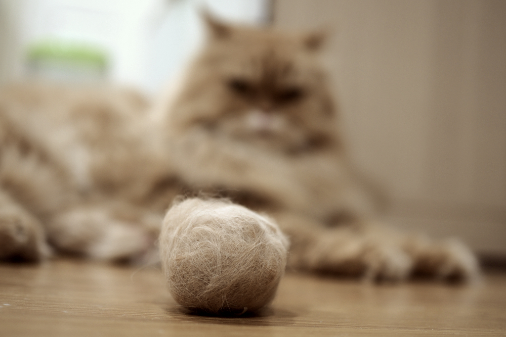 Hairballs in Cats