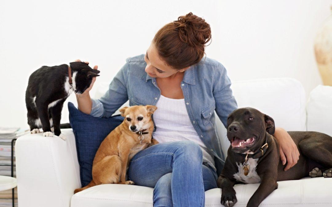 Nelspruit Pet Sitters & Kennels Directory